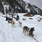Our sled team and guide at base camp - Great Adventure - beautiful scenery!!