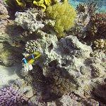 Foto di Red Sea Dive Center