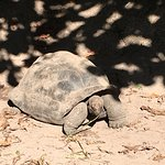 The famous tortoise at the national park where La digue Island Lodge premium rooms are located