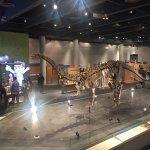 Skeleton of a Dinosaur!