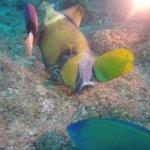 Photo of Atlantis International Diving Services
