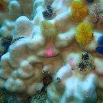 Photo de Asia Divers