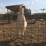 Foto de The Alpaca Farm