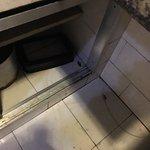 Cafards dans les placards de cuisine