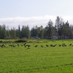 Photo of Creamer's Field Migratory Waterfowl Refuge