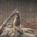 Foto di Louisville Zoo