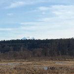Foto de Nisqually National Wildlife Refuge