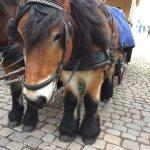 Лошадь из сказки