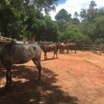 Photo of Raul Sampaio Horses4u