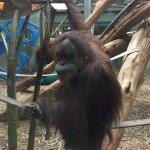 Foto de Louisville Zoo
