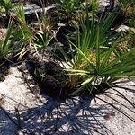 Blackened trunks with vibrant vegetation.