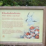 Rhondodendron info