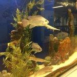 Fish tank inside museum