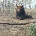 Foto de Toledo Zoo