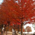 Maplewood Cemetery Photo