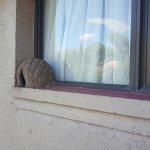 Nido de pájaro en la ventana de la habitación