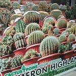 Photo of Cactus Valley