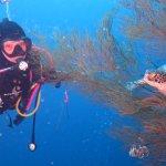 Photo of Froggies Divers Bunaken