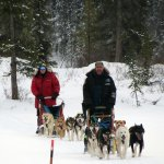 Following the Yukon Quest trail markers