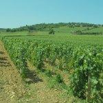 城壁外のワイン畑