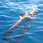 Foto di Royal Delfin