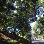 舊岩崎府邸庭園張圖片