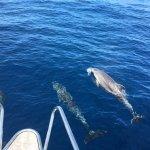 Excursiones  en Velero - Delfines