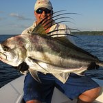 A nice roosterfish ready to be returned to the ocean.