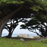 Point Pinos - Pacific Grove California