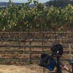 Riding through the beautiful vineyards.....
