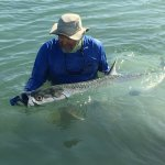 Our awesome guide releasing the big tarpon.