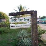 Tipple Tree Beya Foto