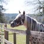 One of the horses at the farm
