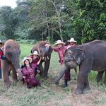 """""""our"""" baby elephants"""