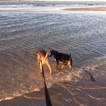 Rudy and Sam, rescue dogs, first time at the beach. Checking out waves and shells under the wate