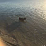 Sam enjoying the water.