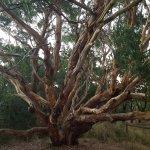 Interesting tree at the top of Screw Creek walk