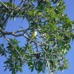 Photo of Active Nature Bacalar
