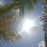 Coconut Palms offer some shade.