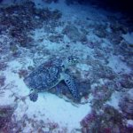 Turtle at Cozumel