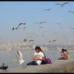 Sea Gulls Sea Gulls Everywhere @Marine Drive