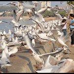 So many sea gulls on Marine Drive