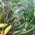 Foto de Lo de Perla Jungle Garden