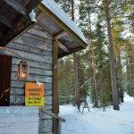 Cute hut in the woods