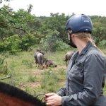 te paard kun je dicht bij de wilde dieren komen, heel bijzonder!