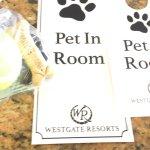 Pet friendly Resort 💕