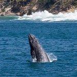 Photo de Capt. Dave's Dolphin & Whale Watching Safari