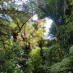 wunderschöne Fauna auf dem Pinnicles Track ( Kauaeranga )
