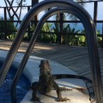 View from the terrace at sunrise and George, the resident iguana at the time of his drink.