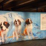 Barryland - Musee et Chiens du St-Bernard